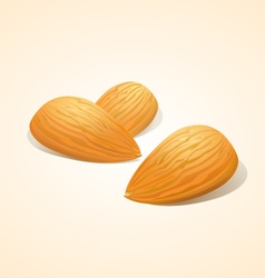 Almond vector image vector image