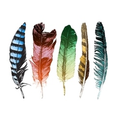 Colorful hand drawn feathers on white background vector