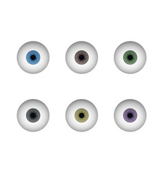 a set of eyeballs human eye vector image