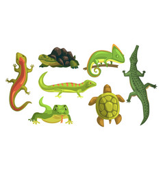 Amphibian animals collection turtle chameleon vector