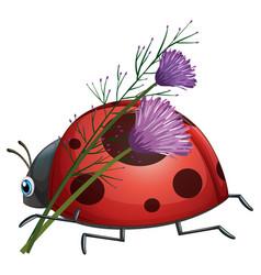 Ladybug with purple flower vector