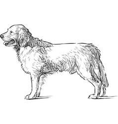Retriever sketch vector