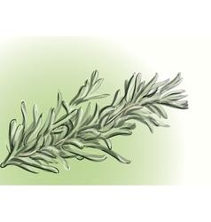 Rosemary vector