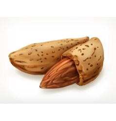 Almonds in shell icon vector