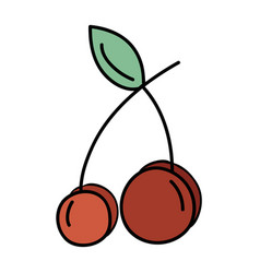Delicious fresh cherry organic fruit vector