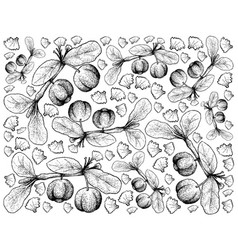 Hand drawn background of barbados cherry fruits vector