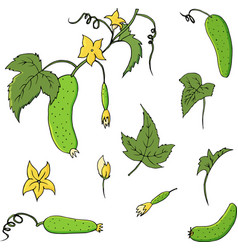 hand drawn vegetable set of cucumbers vector image