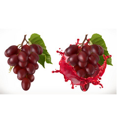 red wine splash and grapes fresh fruit 3d icon vector image