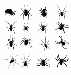 set black silhouette spider icon isolated on white vector image