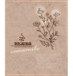 Vintage background with camomile on old paper vector