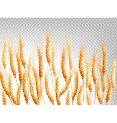 Wheat isolated on a transparent background EPS 10 vector