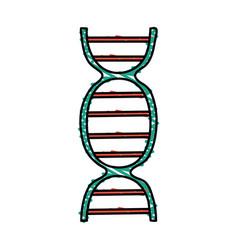 color crayon stripe dna molecule vector image vector image