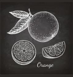 chalk sketch orange vector image