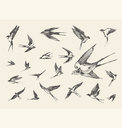 flock birds flying swallows drawn sketch vector image