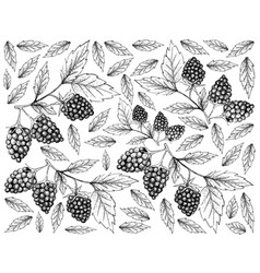 Hand drawn background of fresh blackberry fruits vector