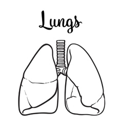 Lungs of a healthy person chitsye vector