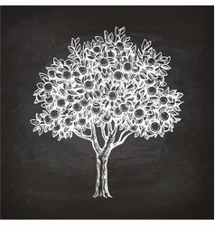 Chalk sketch of orange tree vector