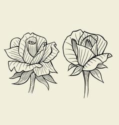 Flower set of rose vector