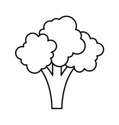 fresh broccoli isolated icon design vector image