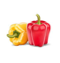 fresh red and yellow peppers vector image