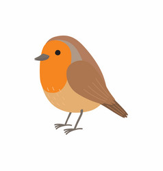 robin bird isolated on white vector image