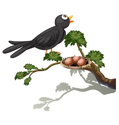 A black bird at the branch of a tree with a nest vector image