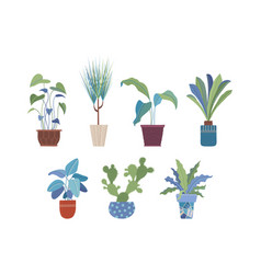 domestic flowers in pots flat set vector image