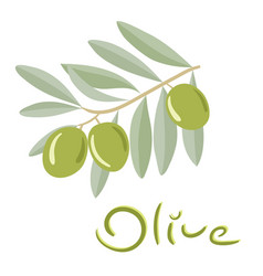 green olives on a branch with leaves vector image