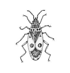 insects bugs beetles the firebug pyrrhocoris vector image