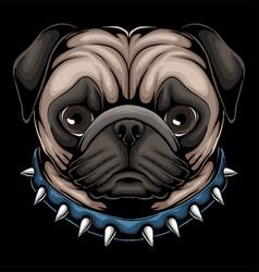 pug dog head a wearing collar vector image