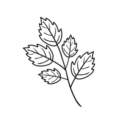 Silhouette toothed leaves with ramifications vector image