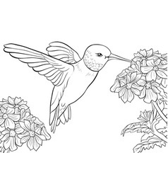 Adult coloring bookpage a cute humming bird and vector