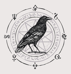 banner with hand-drawn raven and sorcery signs vector image