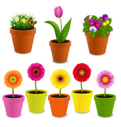 Flowers in pot collection vector