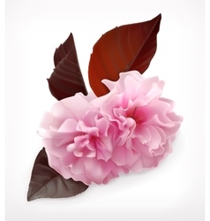 Cerry blossom flower vector image vector image