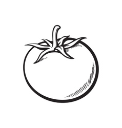 Sketch style drawing of shiny ripe tomato vector image vector image