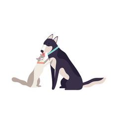 cartoon friendly dog licking happy cat enjoying vector image