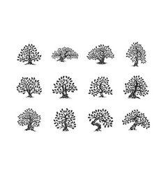 huge and sacred oak tree plant silhouette logo vector image