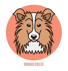 Portrait of border collie vector