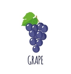 Grape icon in flat style on white background vector image