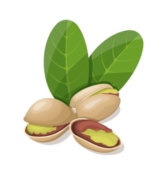 Pistachios with leafs isolated on white vector image