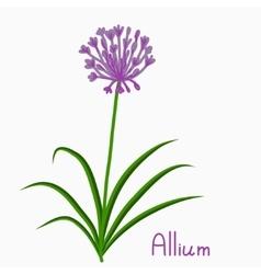 Allium plant vector image