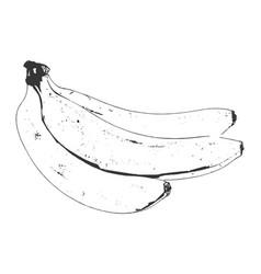 bananas hand drawn sketch vector image