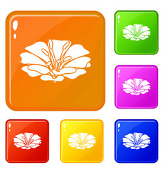spring flower icons set color vector image