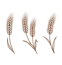 isolated wheat ears set vector image
