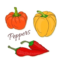 Set of hand drawn sketch peppers Chili and vector image