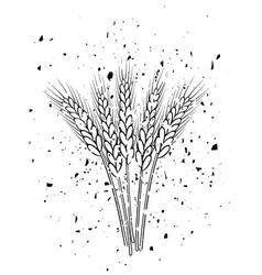wheat ears vector image