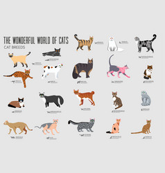 Breed cats icons set cute animal vector