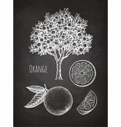 Chalk sketch of orange vector