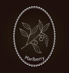 Marlberry ardisia japonica medicinal plant vector